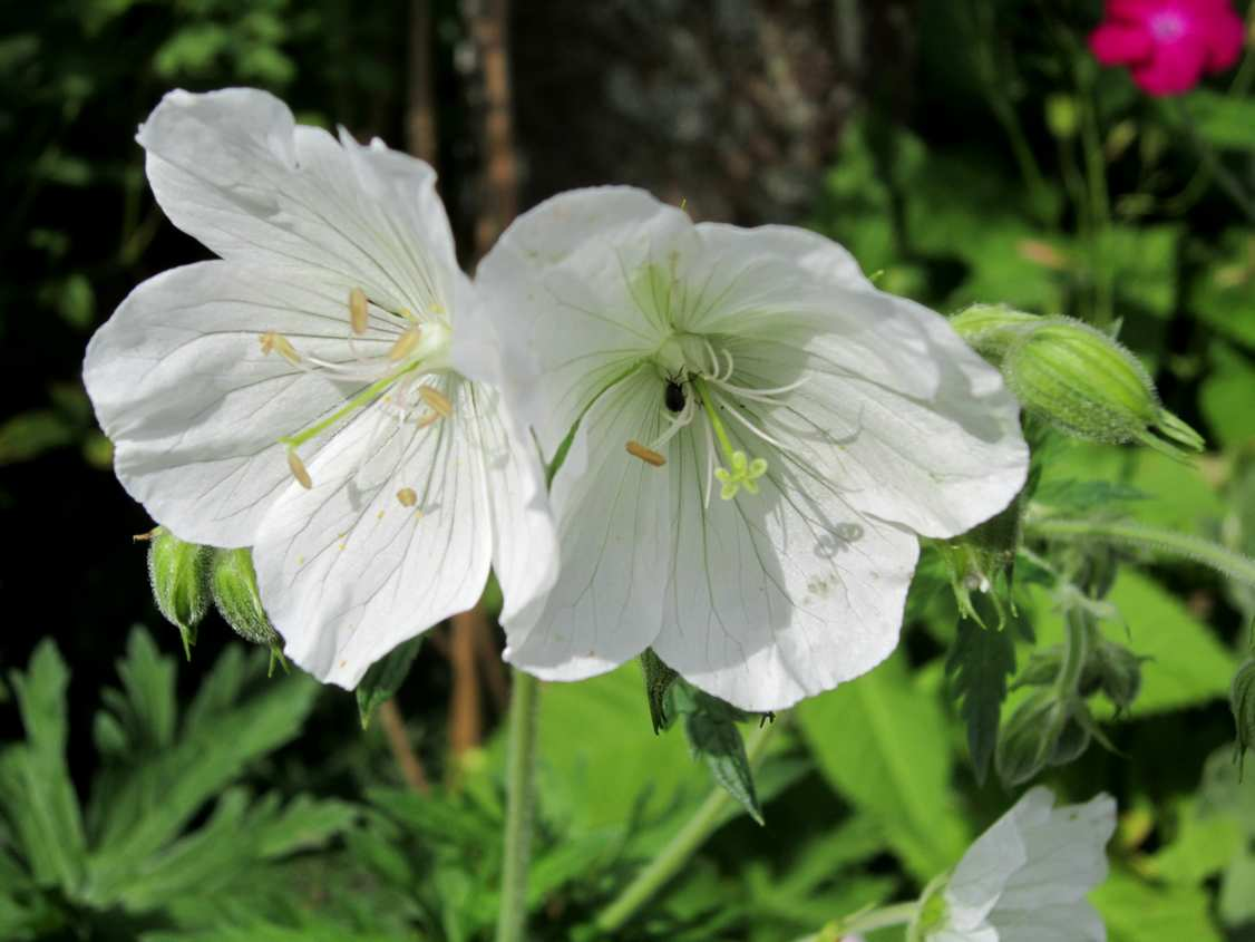 Les jardingues les savoir faire du jardinier for Savoir jardiner